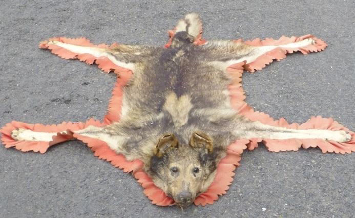 Loup (peau)